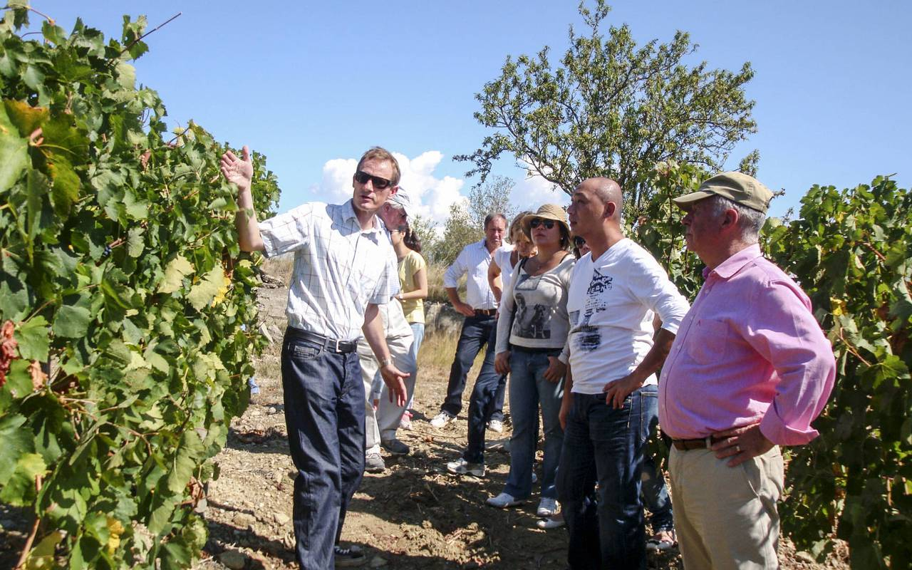 visit to a farm, wine tourism in the herault vineyard, les carrasses