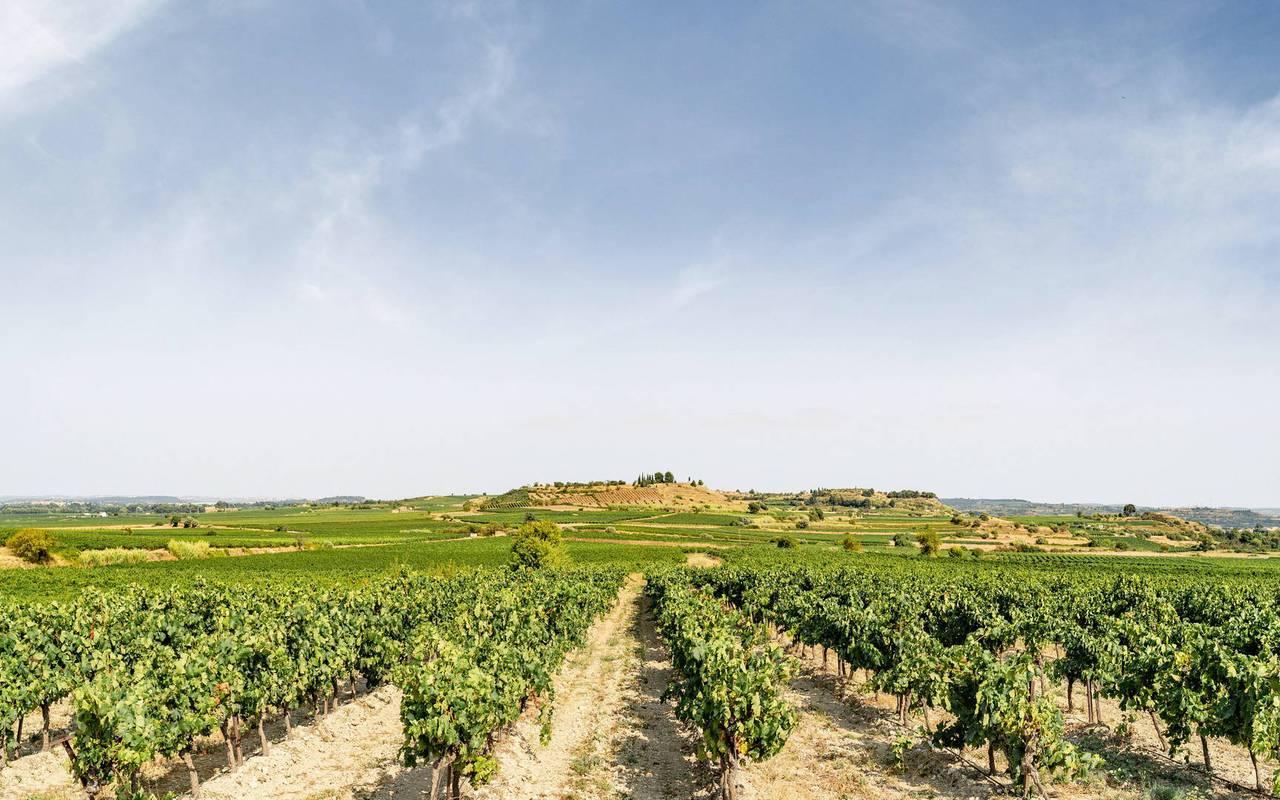 vineyard landscape, Hérault wine estate, les carrasses
