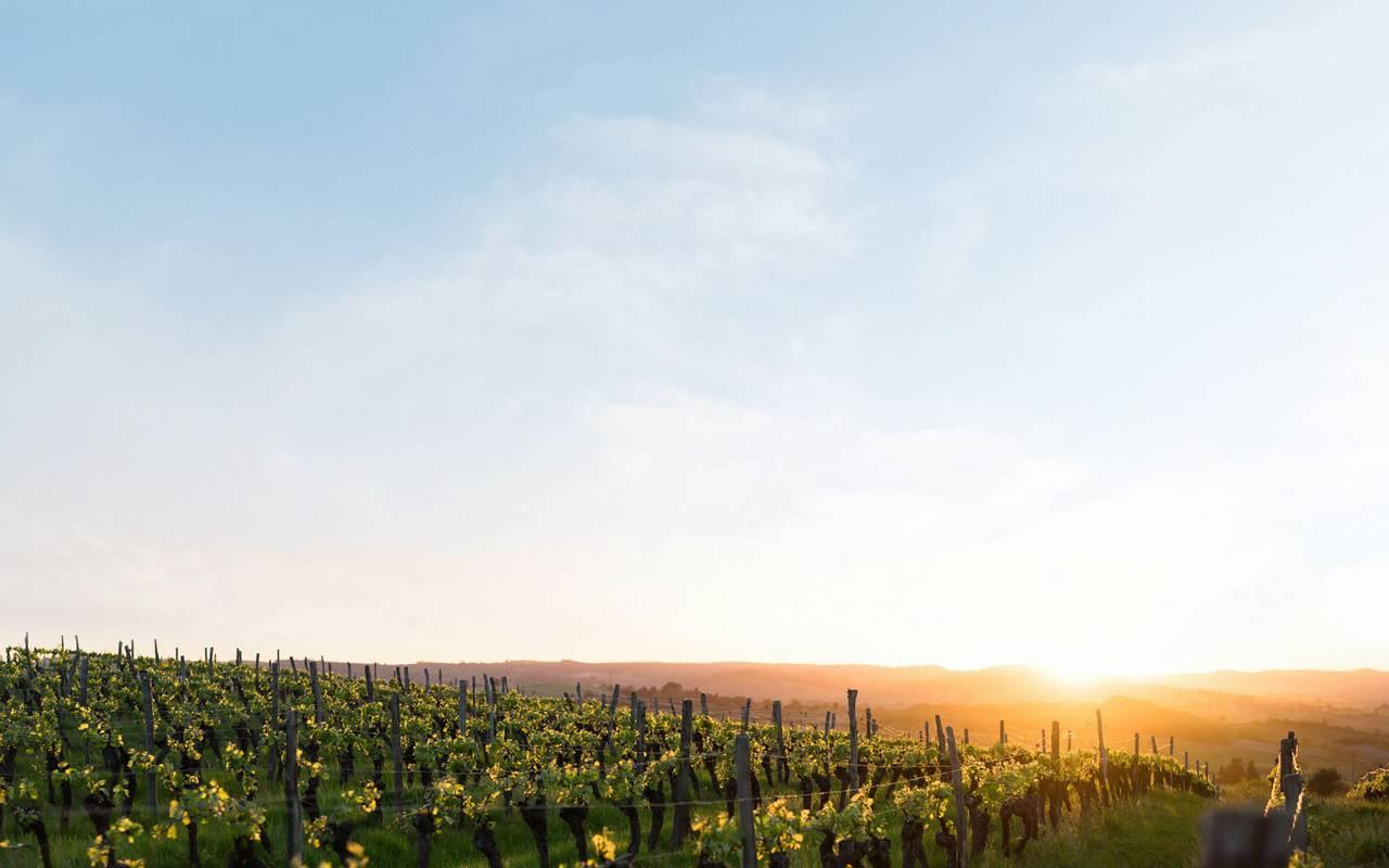 Coucher de soleil dans les vignes, vignoble languedoc, Domaine et Demeure
