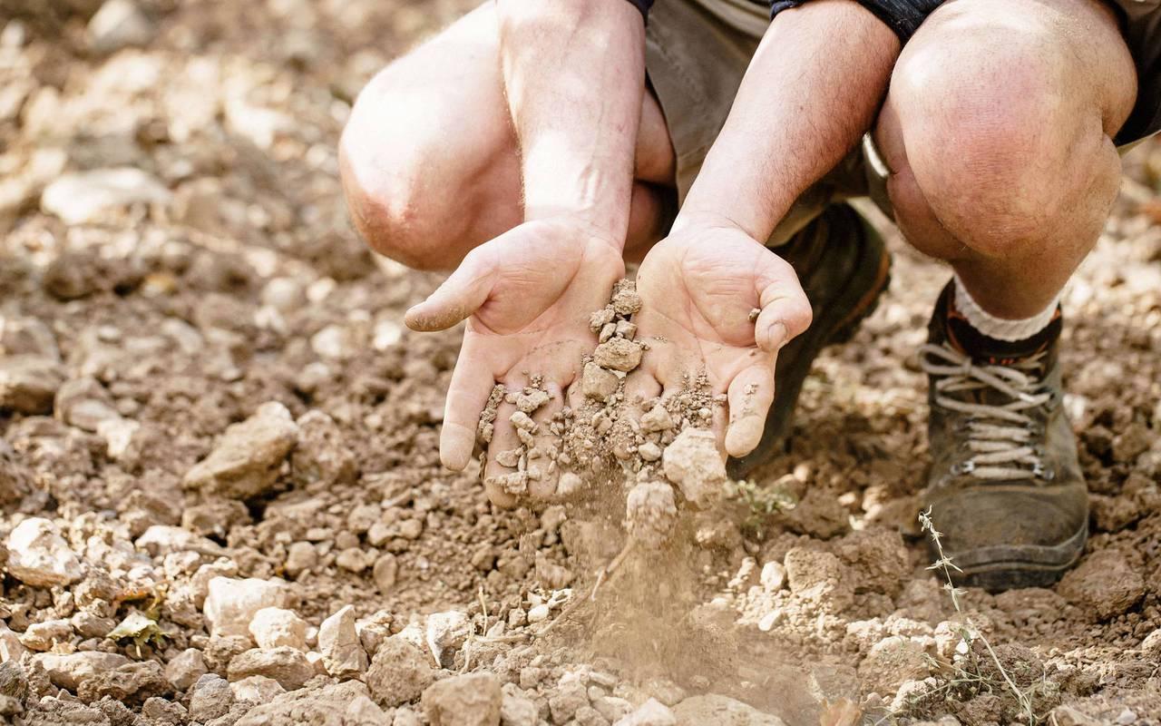 personne qui tient de la terre, domaine viticole Hérault, les carrasses