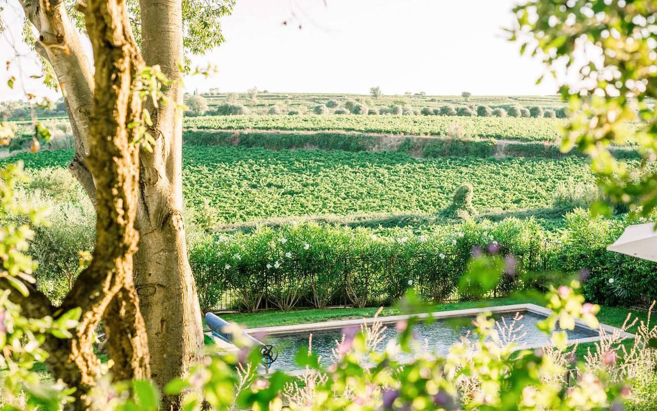 piscine au milieu des vignes, domaine viticole Hérault, les carrasses